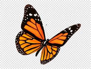 flowers for butterfly png image 6
