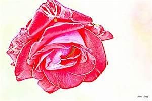 Blume Der Liebe : rose die blume der liebe digitale kunst ~ Whattoseeinmadrid.com Haus und Dekorationen