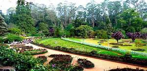 Wild Planet Luxury Jungle Resort