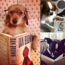 Cute Dogs Reading Books