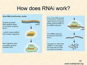 Short history of post-transcriptional gene silencing ...