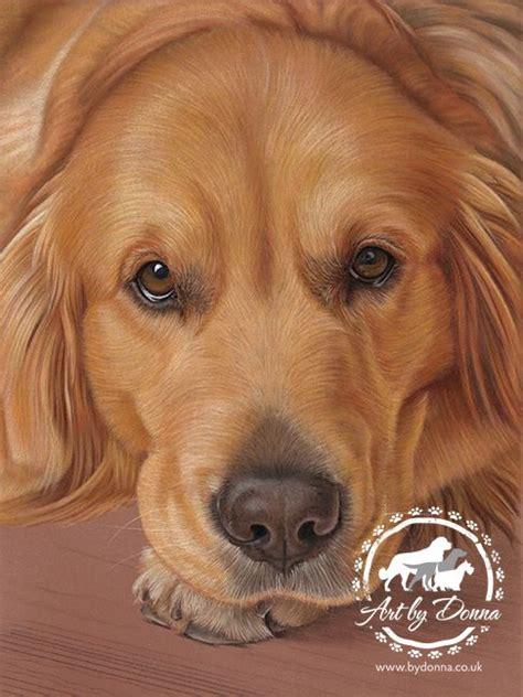 Portrait Of Golden Retriever Dog Drawn By Uk Pet Portrait