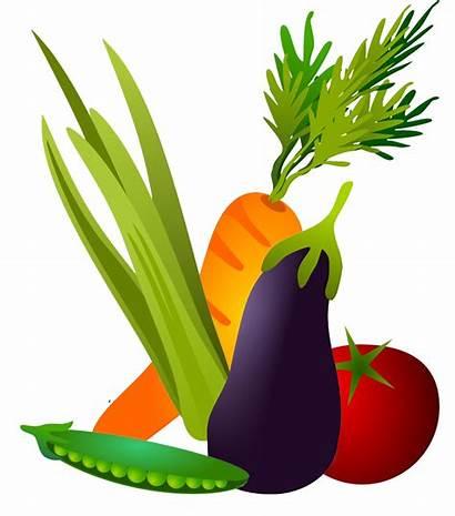 Vegetables Clipart Transparent Clip Different Clipartqueen Kinds