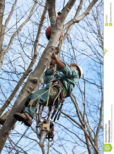 Worker With Chainsaw Climbing A Tree Stock Image   Image