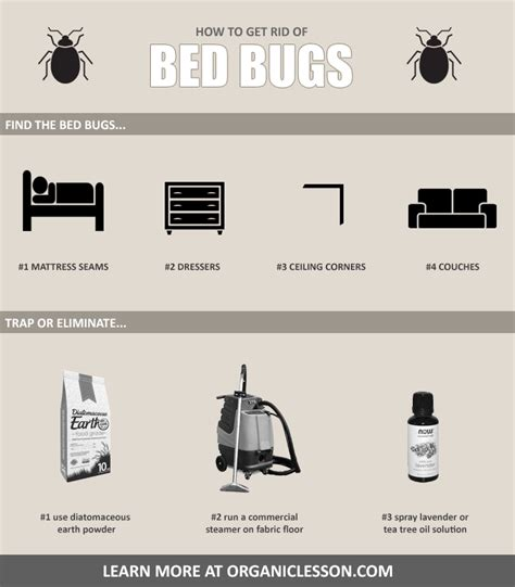 Steamer Carpet by 6 Natural Ways To Instantly Get Rid Of Bed Bugs