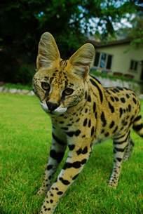 Exotic Animal Show