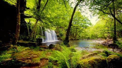 tropical rainforest hd wallpaper background image