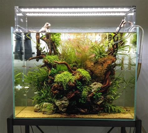 Most Beautiful Aquascapes by 6 Of The Most Clever Home Aquariums Mnn Nature