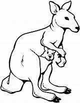 Kangaroo Coloring Animals Wildlife Marsupial sketch template