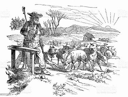 Sheep Shepherd Herd Illustration Istock Illustrations