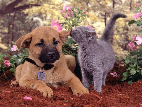 cute pets httpiftttdoaxqp  images