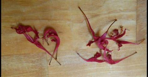 monarde cuisine savoir faire à conserver fleurs de monarde ajouter de la
