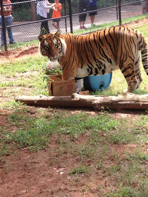 zoo animals internship cats lovely summer these