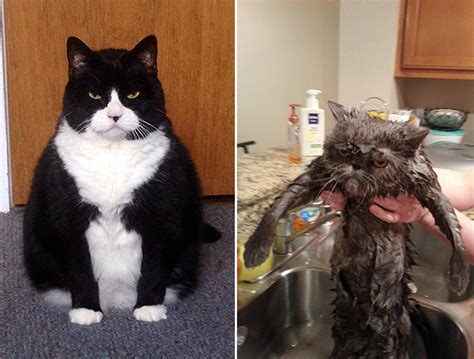 extremely pissed  cats