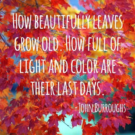 "All Things Audry ""fall"" In Love With Autumn Ten Quotes"