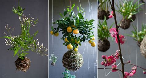 Create An Oasis Of Hanging Plants In Your Home With String