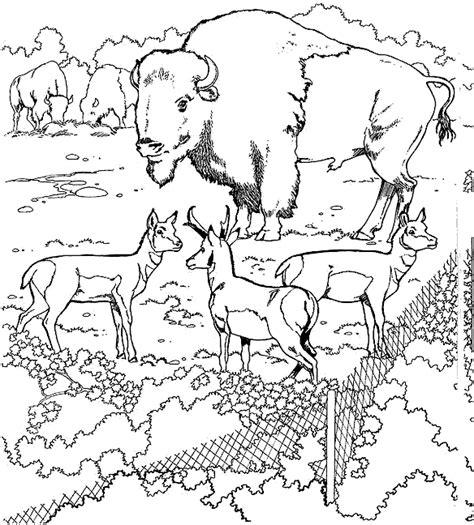 Kleurplaat Natuurmonumenten by Kleurplaten En Zo 187 Kleurplaat Buffels