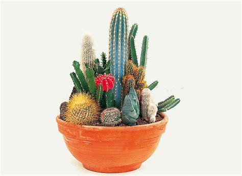 cultiver des cactus en pots
