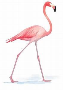What Exactly Are Flamingos Anyway? | Audubon
