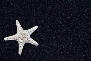 Starfish On Black Sand Photograph by Joana Kruse