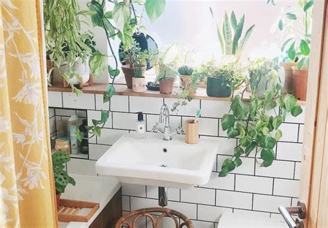 guide    plants   bathroom  pair