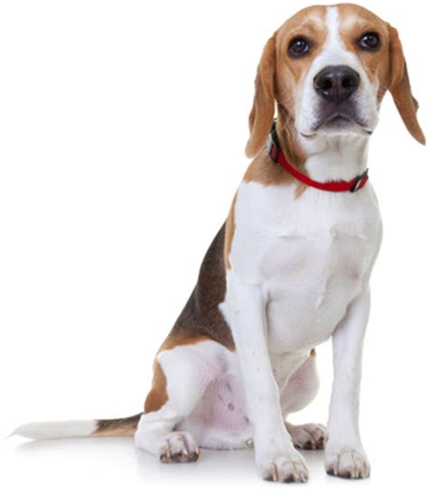 nationwide pet insurance claim form