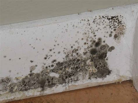 Basement Finishing Company by Black Mold What You Need To Know