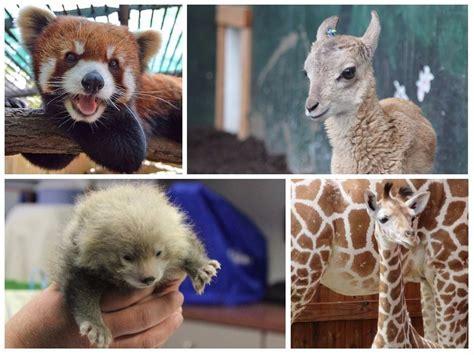 zoo york upstate animal ny cutest named spiderman zoos newyorkupstate monkey animals dies baby