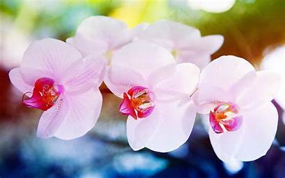 Orchid Macro Flowers Wallpapers Orquideas Px Flores