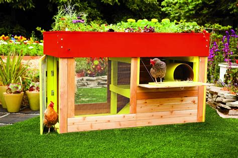 book review reinventing  chicken coop community chickens