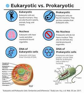 Eukaryotic Vs  Prokaryotic Cells