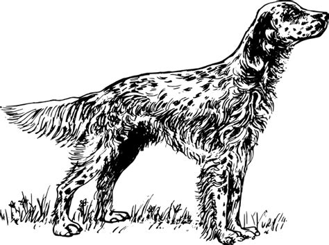 English Setter Puppy Coloring Pages