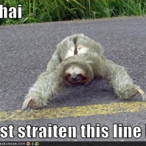 Cute Sloth Meme - cute sloth ignore the caption your daily dose of awww pinterest the o jays sloths and