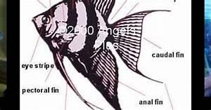 The Anatomy Of An Angle