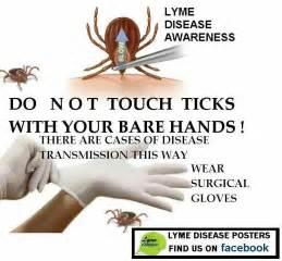 Lyme Disease Stages 3