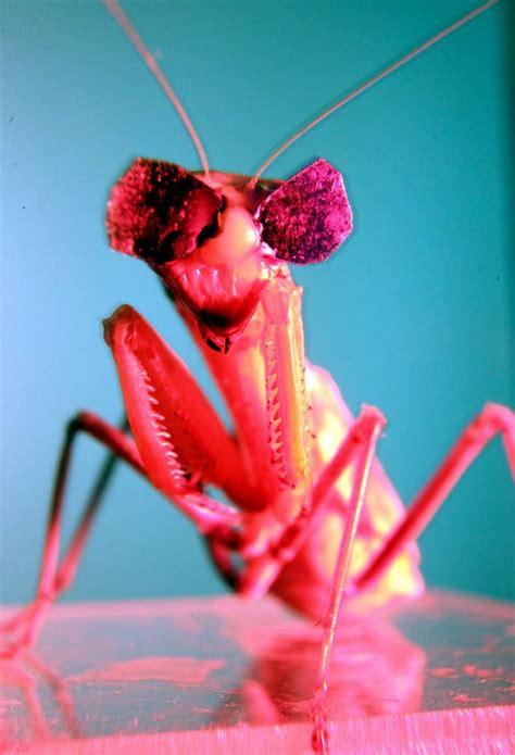 birds beware  praying mantis   brain