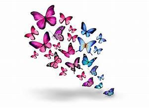 Purple and Blue Butterflies 5k Retina Ultra HD Wallpaper ...