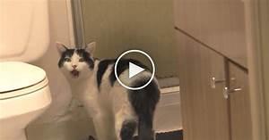 his cat meows at the shower door every dayyoull never With cat bathroom door