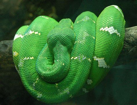 colorful snakes amazing world the world s most colorful snakes