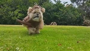 Wie Sieht Ein Hummelnest Aus : star wars dieser hund sieht aus wie ein ewok welt ~ Yasmunasinghe.com Haus und Dekorationen