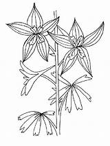 Coloring Flower Pages Larkspur Flowers Printable Colors Recommended Mycoloring sketch template