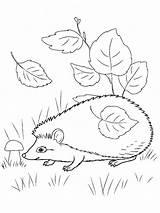 Hedgehog Coloring Leaves 1001coloring Total Nice sketch template