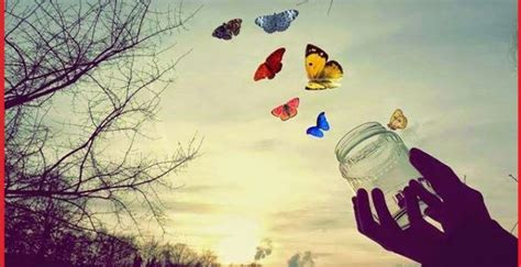 imagenes de mariposas libres fondo de pantalla imagenes