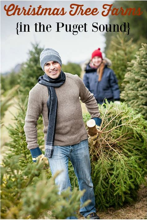 christmas tree farms in topsfield ma where you can cut down trees find a u cut tree farm in puget sound