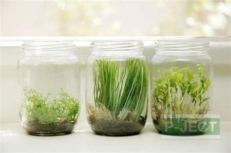 ปลูกต้นไม้ในขวดแก้ว สะอาด   การปลูกพืช