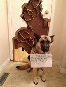 1000 images about dog shaming on pinterest blue wall With locked myself out of my bathroom