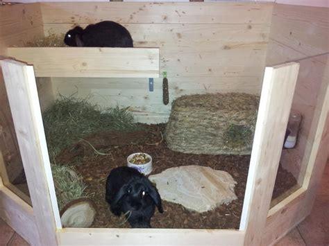 Pvc Boden Kaninchen by Kaninchenforum Das Kaninchen Forum Alben