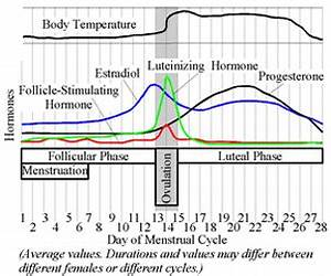 Progesterone Chart For Dogs 10 Homeostasis The Role Of Reproductive Hormones Bio12u