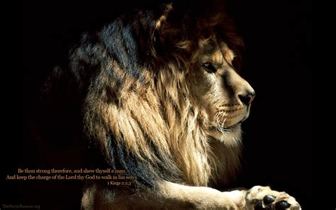 strong lion quotes wallpapers quotesgram