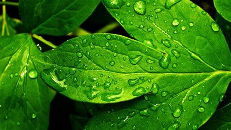 Fresh Photo Hd by Green Nature Hd Wallpaper Impremedia Net